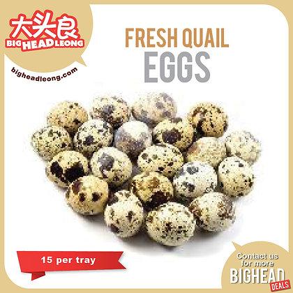 Fresh Quail Eggs 15s