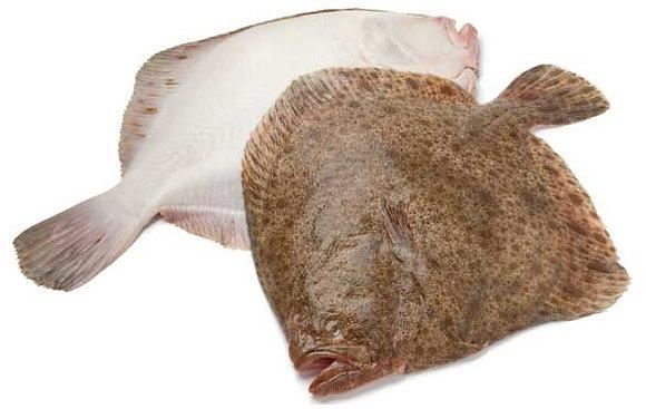 Turbot Fish (Korea)/ 650g-800g