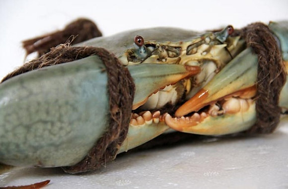 Green Mud Crab (Indonesia) 300-400g/ 5nos