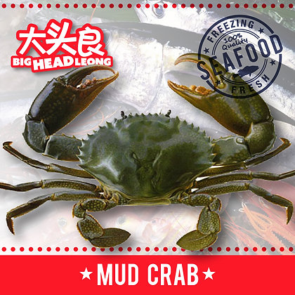 Green Mud Crab (Indonesia)/ 500-600g/ 3nos