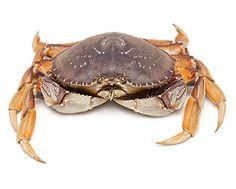 Dungeness Crab (Canada)/ 1kg/ 2nos