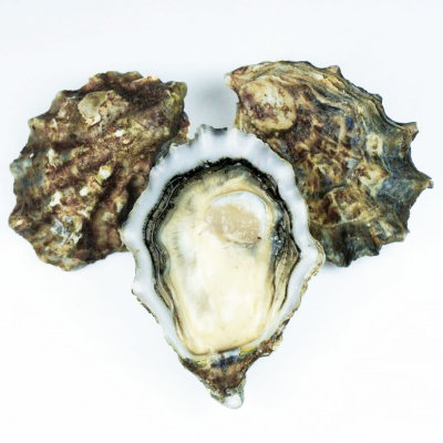 Pacific Oysters (Canada) (Live Freeze)/ Dozen
