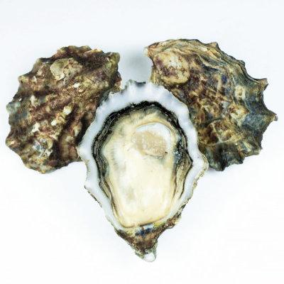 Pacific Oysters (Canada)/ Dozen