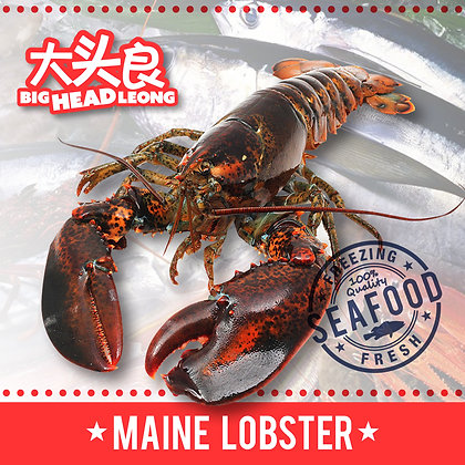 Maine Lobster (Canada)/ 450-550g/ 2nos