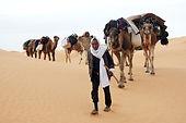 Dromadaire dans desert Tunisien.jpg