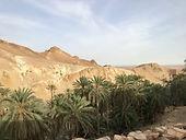 Oasis-de-montagne-Tozeur-Djerba-Tunisie.jpg