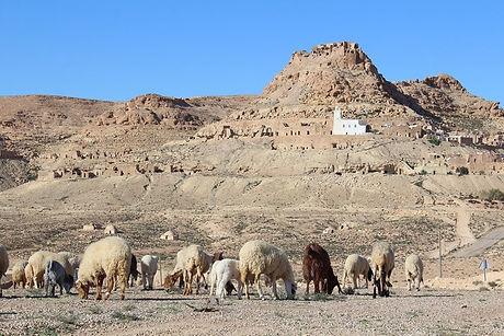 Trek dans la région Berbère de Djerba à Douiret, Tunisie