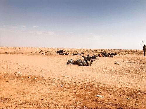 Excursion Dromadaire dans le désert de Gabes à Ksar Ghilane.