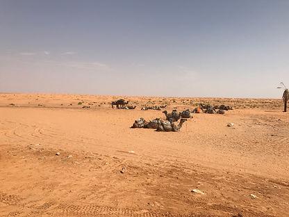 Bivouac dans le désert Tunisien en Méharée