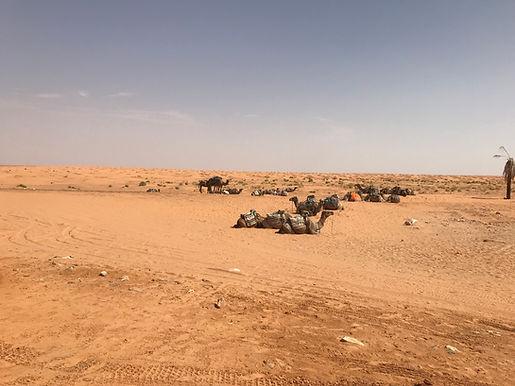 Tozeur méharée dans le désert à Douz.