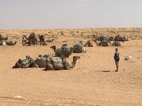 Excursion en dromadaire de Djerba à Ksar Ghilane