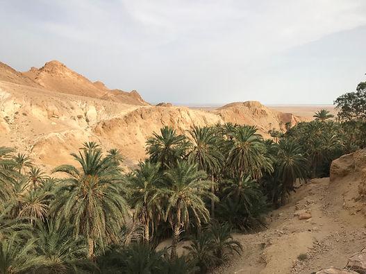 Circuit Djerba Tozeur.  Les oasis de montagne