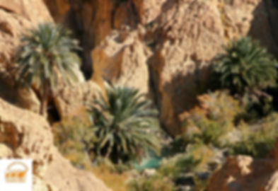 Circuit sud tunisie à l'oasis de Chebika avec Grand-Sahara-Aventures.jpg