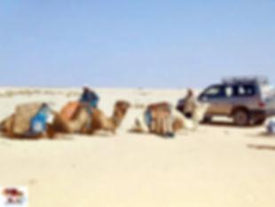 Départ des chameaux-Tunisie.jpg