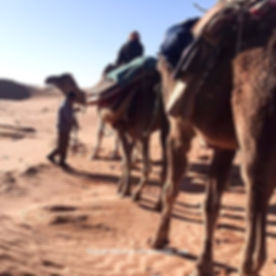 Méharée dans le désert Tunsien.jpg