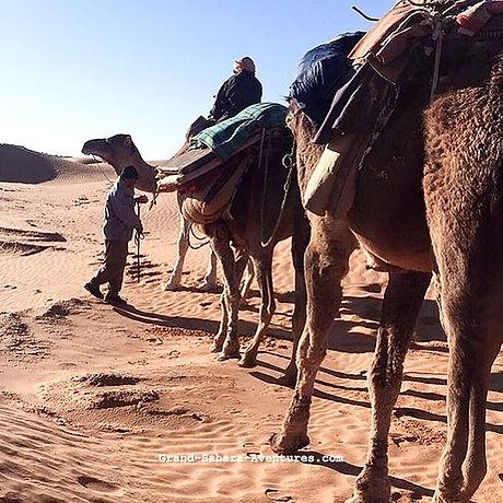 Depuis Zarzis, Méharée dans le désert Tunsien.