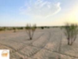 Excursion et bivouac dans le désert du sahara Tunisien depuis Djerba et zarzis, Grand-Sahara-Aventures.jpg