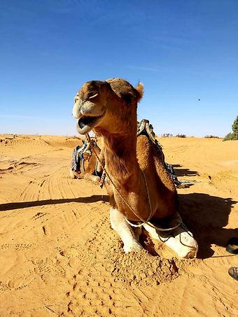Excursion à dos de Dromadaire dans le désert Tunisien