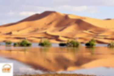 Le desert Tunisien.jpg