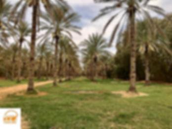 Excursion Djerba Ksar ghilane, la palmeraie avec Grand-Sahara-Aventures tunisie.jpg