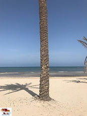 Palmier sur la plage de Djerba.jpg