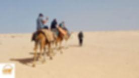 De Djerba Méharée à Douz dans le désert Tunisie.jp