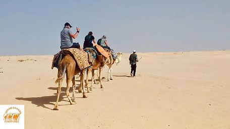 De Djerba à Douz dans le désert balade à DromadaireTunisie