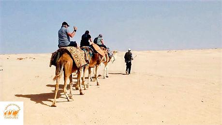 Zarzis, randonnée chamelière dans le désert.