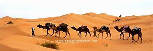 Randonnée Chamelière dans le désert tunisien à Douz