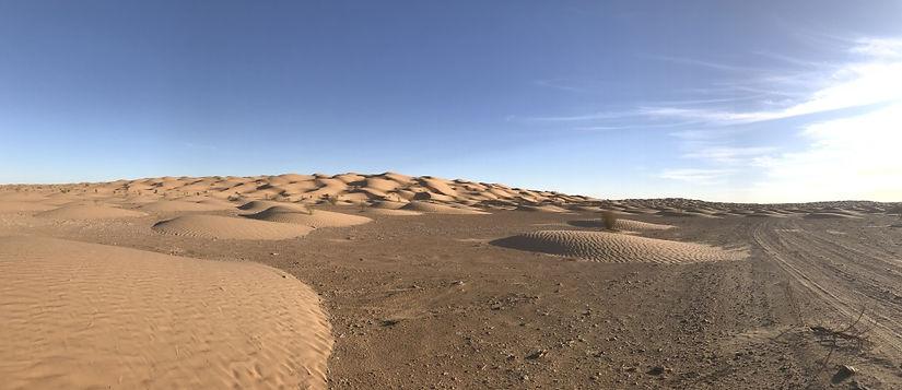 Le désert en randonnée chamelière de Gabes à Douz. Tunisie