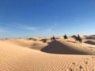 Randonée cheval à Djerba.jpg