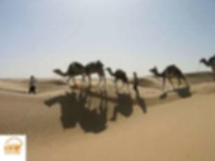 Excursion et Méharée dans le désert a Douz, depuis Djerba Tunisie, Grand-Sahara-Aventures.jpg