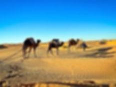 Excursion privative dans le désert Tunisien au départ de Djerba ou Zarzis.jpg