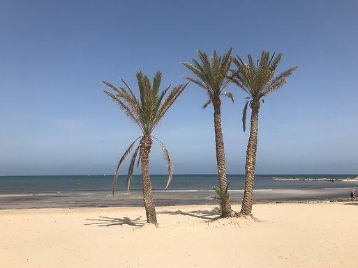 La plus belle plage de Djerba.Djerbatour.JPG