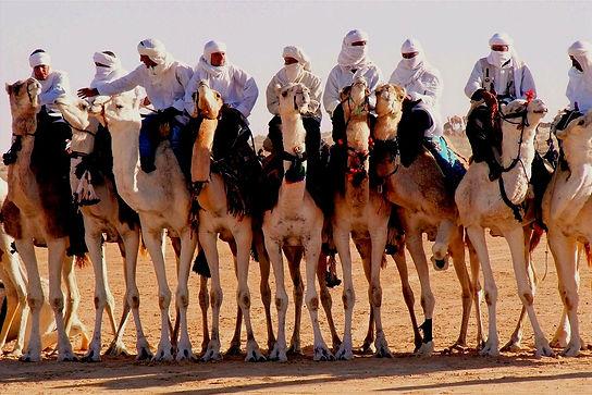 Dromadaires du Festival du Sahara de Douz.