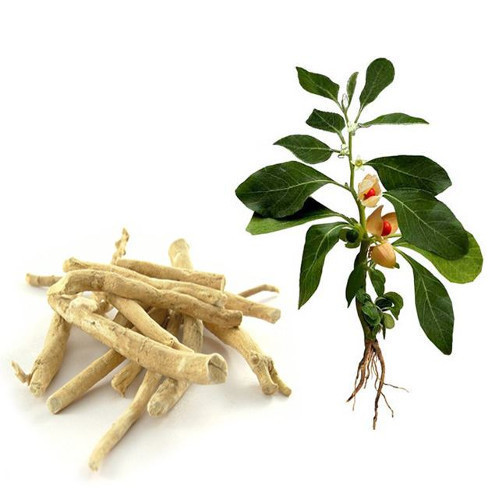 The Miracles of Ashwagandha Known for Millennia.