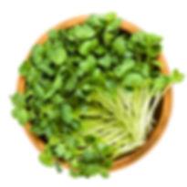 Radish_Daikon_Microgreens.jpg