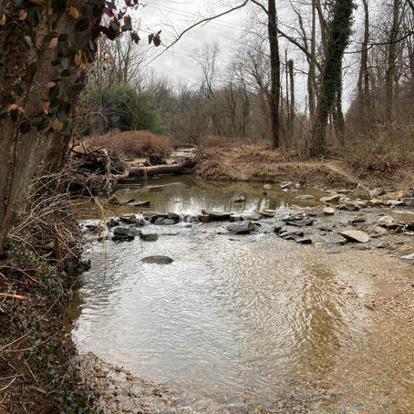 A Year in the Life of Pimmit Run: Winter Wetlands