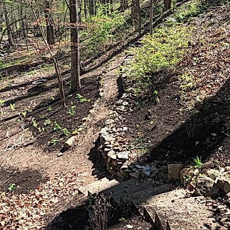 Restoring Woodland Native Flora