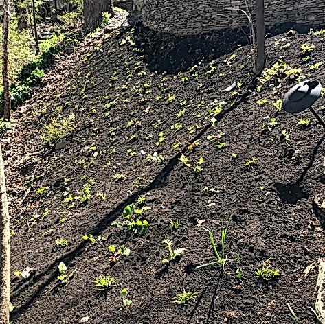 Addressing Erosion with Native Plants