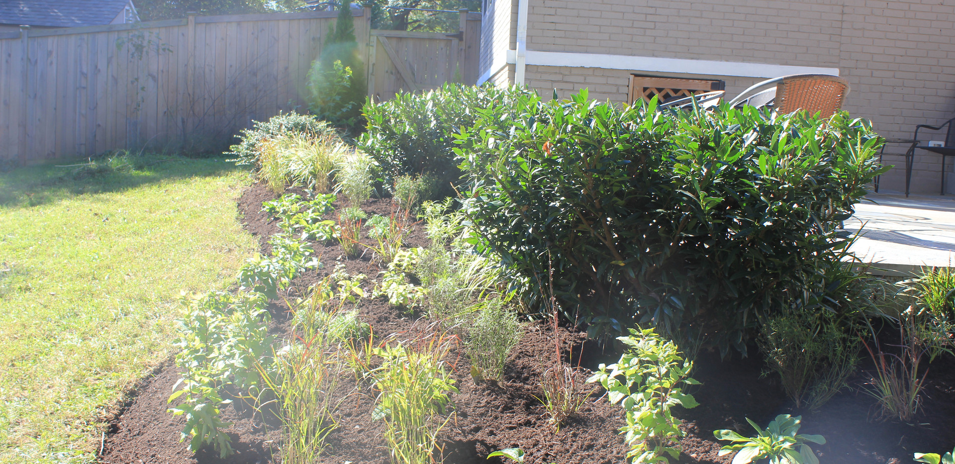 Replacing Lawn with Native Plants