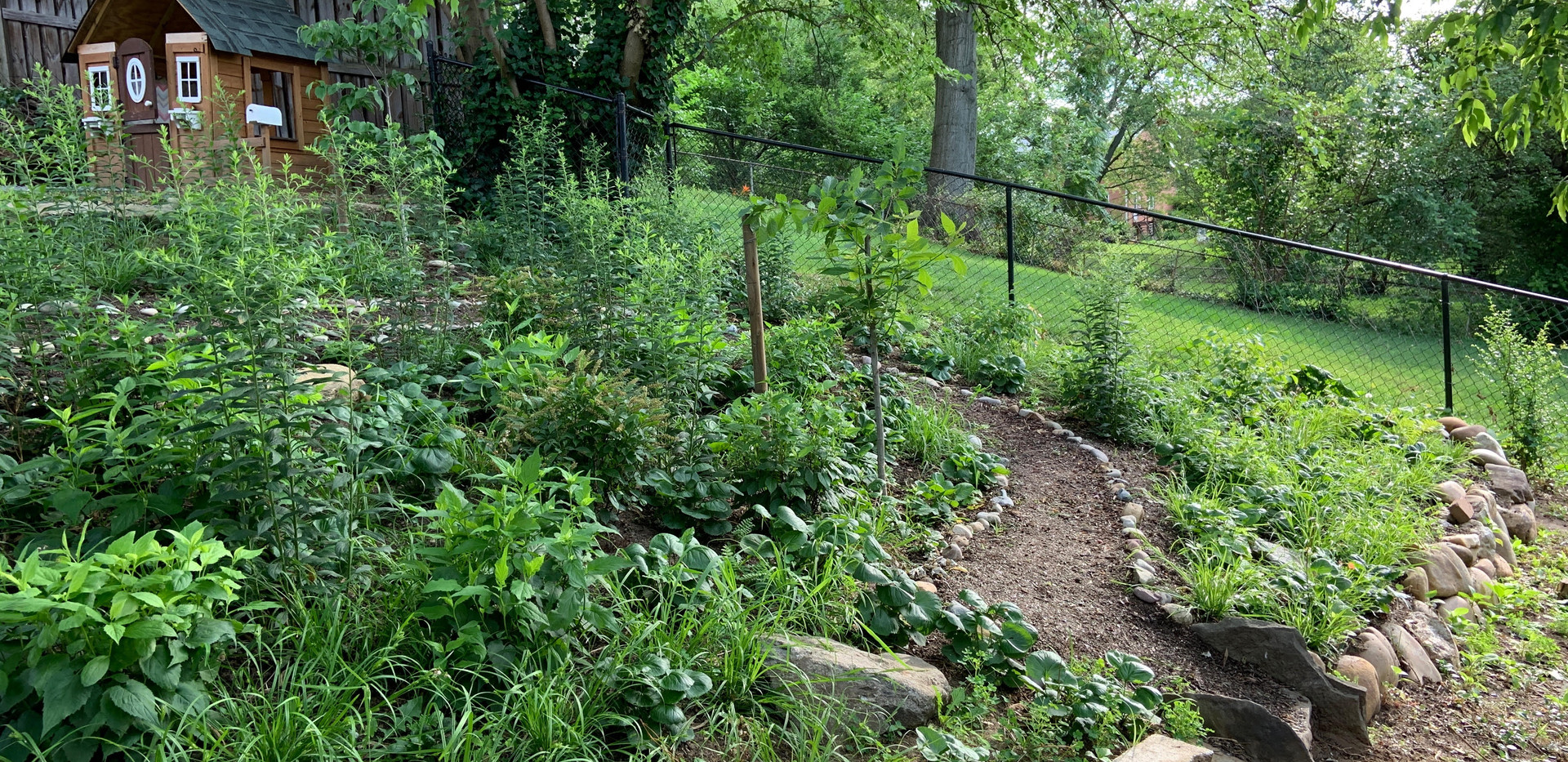 Restored backyard native slope