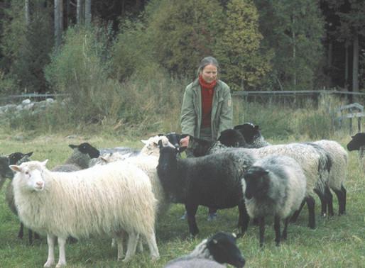 Begrenset opplag: Møbelstoffer i ull