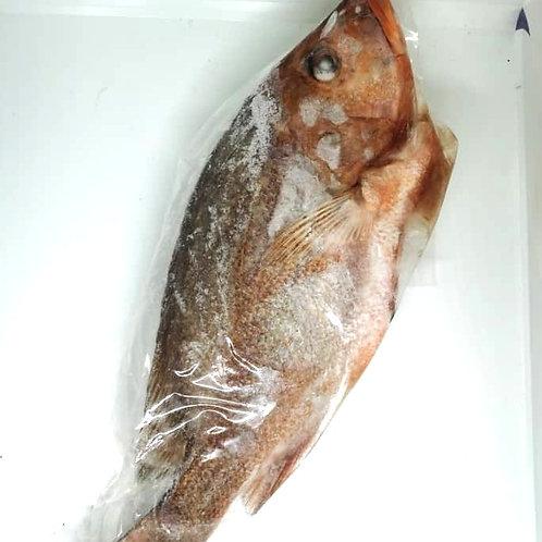 Red Snapper (红鸡鱼), gutted, 800gm - 1kg
