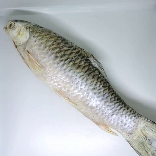 Sultan Fish (Ikan Jelawat / 苏丹鱼), gutted   |   Size: 1.3kg
