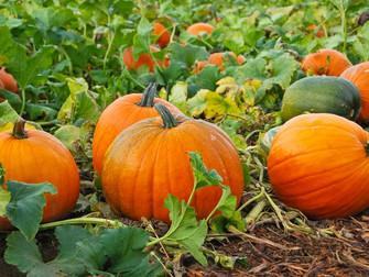 Irreplaceable Pumpkin