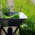 garden-6201943.jpg
