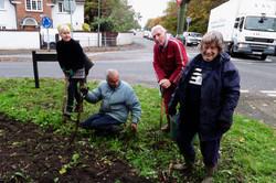 Primrose, Snowdrods planting