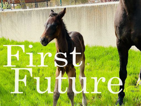 First Future, primer potro de 2021 - our first foal of this year