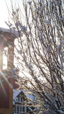 Bournville in Winter